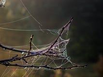 Spindeln förtjänar på en filial i höstsoluppgång arkivbilder