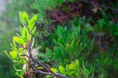 Spindeln förtjänar på träd royaltyfri bild