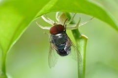 Spindeln flyger kontra royaltyfri foto
