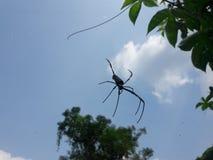 Spindeln på dess förtjänar arkivfoton