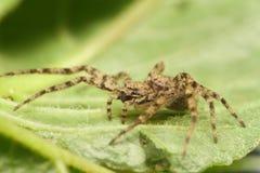 Spindeln på växten royaltyfri foto