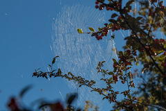 Spindeln rotera en guld- rengöringsduk Royaltyfri Foto
