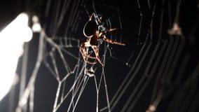 Spindeln rotera en rengöringsduk i makro stock video