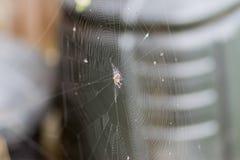 spindeln rotera rengöringsduk Royaltyfri Bild