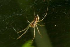 spindeln rotera rengöringsduk royaltyfri fotografi