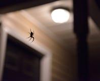 Spindeln väntar på Royaltyfri Foto