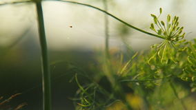 Spindeln väver en rengöringsduk av stock video