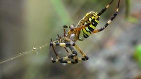 Spindeln väver en rengöringsduk av lager videofilmer