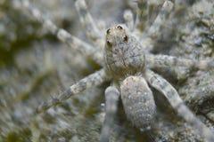 Spindeln vaggar på Royaltyfria Foton