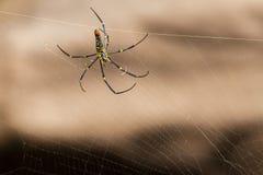 SpindelNephila guld- siden- orb-vävare, en jätte- wood spindel eller bananspindel fotografering för bildbyråer