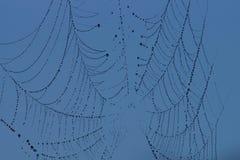 Spindelrengöringsduk Royaltyfria Bilder