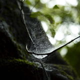 Spindelrengöringsduk Arkivbild