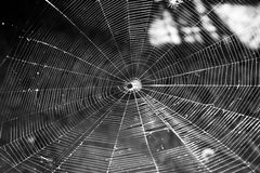 spindelrengöringsduk royaltyfri bild