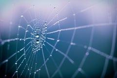 Spindelrengöringsduk i morgonen royaltyfri bild