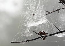 Spindelrengöringsduk i morgonskogen royaltyfria foton