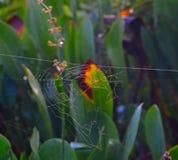 Spindelrengöringsduk i solljuset Fotografering för Bildbyråer