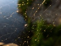 Spindelrengöringsduk med catched flugor arkivbilder