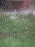 Spindelrengöringsduk med dagg Arkivbilder