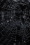 Spindelrengöringsduk med dagg Royaltyfri Bild