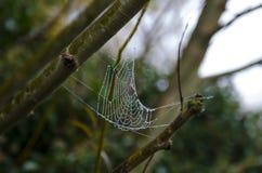 Spindelrengöringsduk med dagg Royaltyfri Foto
