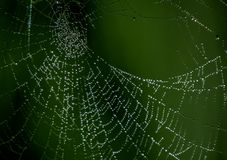 Spindelrengöringsduk med droppar arkivbild