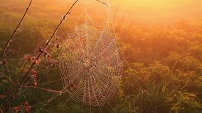 Spindelrengöringsduk med droppar av mist på gryning, härlig bokeh stock video