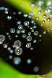 Spindelrengöringsduk med regndroppar Royaltyfri Foto
