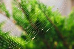 Spindelrengöringsduk med rov i den royaltyfri foto