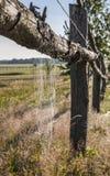 Spindelrengöringsduk med vattendroppar på ängen Fotografering för Bildbyråer