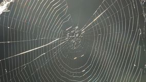 Spindelrengöringsduk och spindel stock video