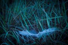 Spindelrengöringsduk på dagget Arkivbild