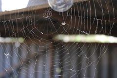 Spindelrengöringsduk på den ljusa kulan 19677 för bakgrund royaltyfria bilder