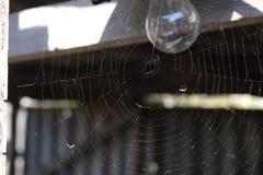 Spindelrengöringsduk på den ljusa kulan 19676 för bakgrund fotografering för bildbyråer