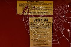 Spindelrengöringsduk på en kornask Royaltyfria Foton