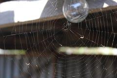 Spindelrengöringsduk på ljus kula 19675 för bakgrund royaltyfri fotografi
