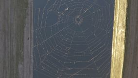 Spindelrengöringsduk på vattenbakgrundsslutet upp lager videofilmer