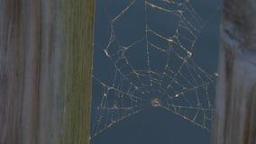Spindelrengöringsduk på vattenbakgrundsslutet upp stock video