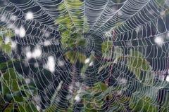 Spindelrengöringsduk som är våt med morgondagg arkivfoto