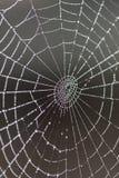 Spindelrengöringsduk som täckas av dagg Arkivbild