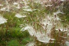 spindelrengöringsdukar Arkivfoto