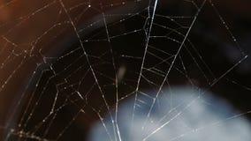Spindelrengöringsdukclosen upp långsam rörelse stock video