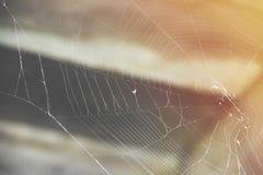 Spindelrengöringsduken i loften i solen rays arkivfoto