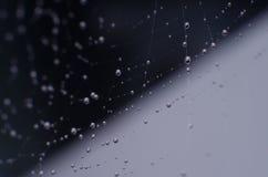 Spindelrengöringsduken med daggdroppar Arkivfoto