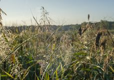 Spindelrengöringsduken med daggdroppar mousserar i solen royaltyfri foto