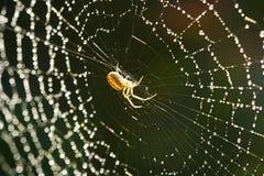 spindelrengöringsduk Arkivfoton