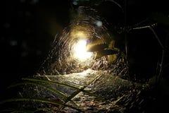 Spindels rengöringsduk Arkivfoton