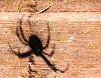 Spindels skugga på trät royaltyfri bild