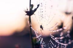 Spindelsammanträde i rengöringsduken Arkivfoto