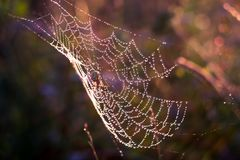 Spindelsammanträde i rengöringsduken Royaltyfri Fotografi