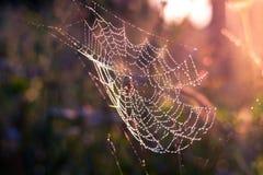 Spindelsammanträde i rengöringsduken Royaltyfria Bilder
